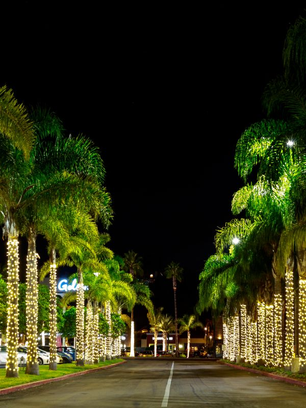 warm white LED lights wrapped on palm trees lining strip mall entrance