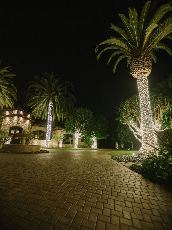 palm trees wrapped with warm white led christmas lights