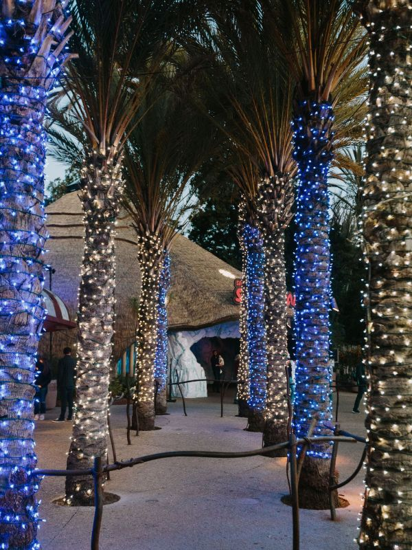 palm trees decorated with blue and white led christmas lights